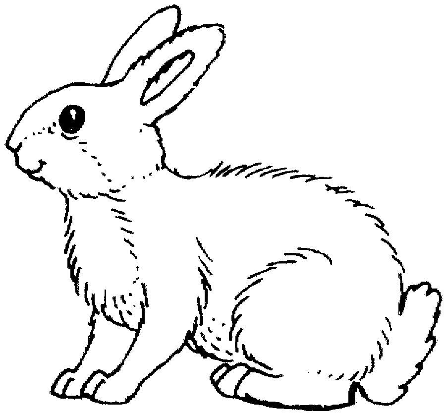 kleurplaat konijn dieren kleurplaat 187 animaatjes nl