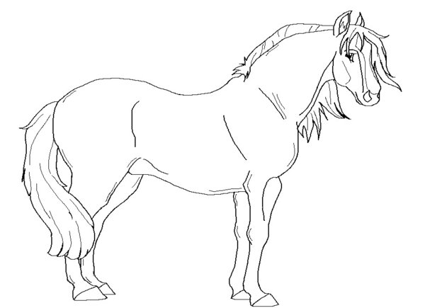Paarden Kleurplaat Fjord Kleurplaat Haflingers Kidkleurplaat Nl