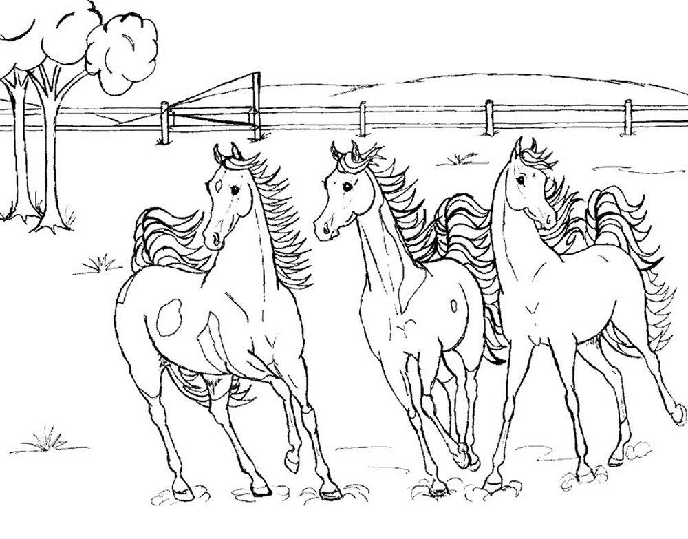 Paarden Kleurplaten Dieren kleurplaten