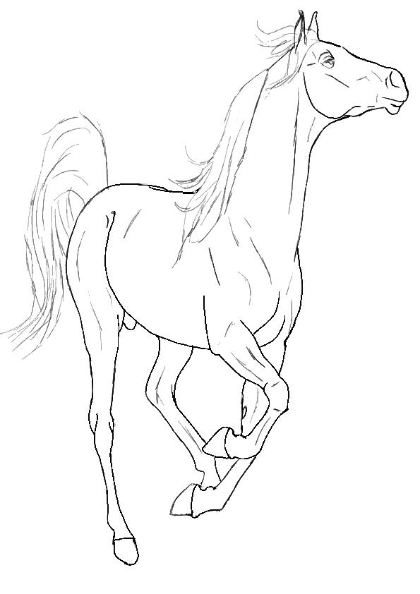 Een Kleurplaat Van Een Paard Paarden Kleurplaat Dieren Kleurplaat 187 Animaatjes Nl