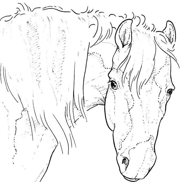 Kleurplaten Echte Dieren.Paarden Kleurplaat Dieren Kleurplaat Animaatjes Nl
