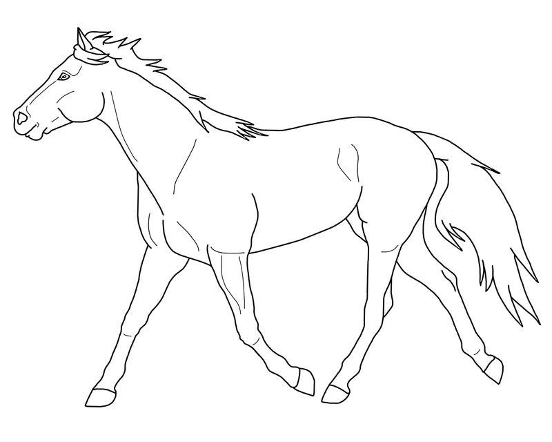 Paarden Kleurplaat Spirit Duurzaamheidseducatie Enschede Duurzaamheidseducatie