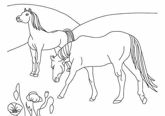Kleurplaten Veulens Paarden Veulen Kleurplaten 187 Animaatjes Nl