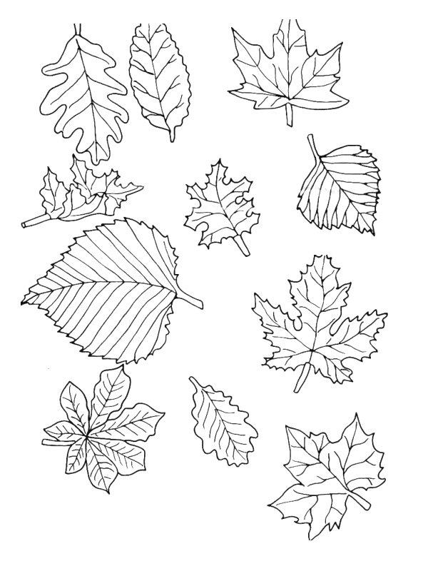 bladeren kleurplaat 187 animaatjes nl