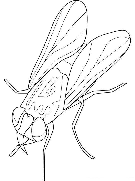 Insecten Kleurplaten