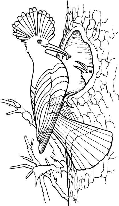 Kleurplaten Vogel