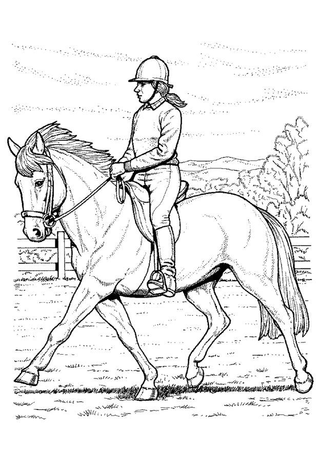 Paardrijden Kleurplaten. Download of print Paardrijden Kleurplaten ...