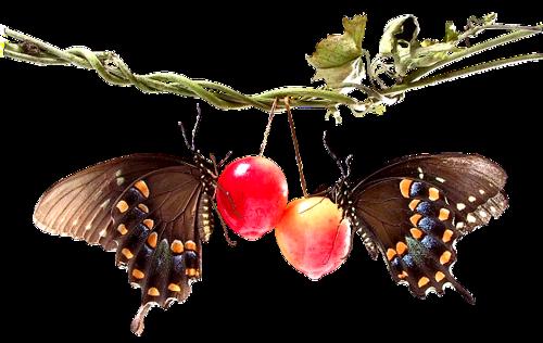 EL RINCON DE ENERI (3) - Página 5 Animaatjes-vlinders-38660
