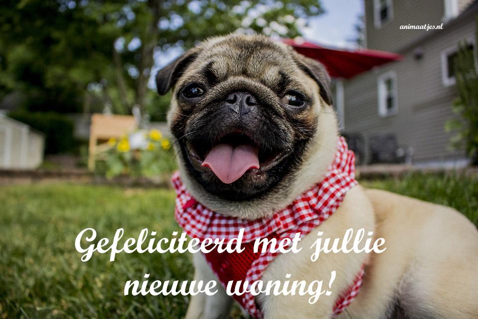 Facebook plaatjes Nieuwe woning Mopshond gefeliciteerd met jullie nieuwe woning