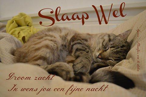 Slaap wel Facebook plaatjes slaap wel droom zacht ik wens jou een fijne nacht droom zacht