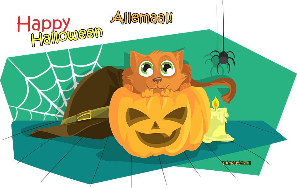 Halloween Kat poes Facebook plaatjes pompoen happy halloween allemaal spinnenweb