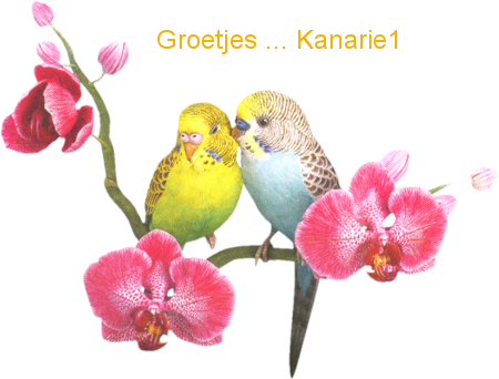 Kanarie Naamanimaties