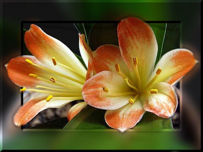 Plaatjes bloemen