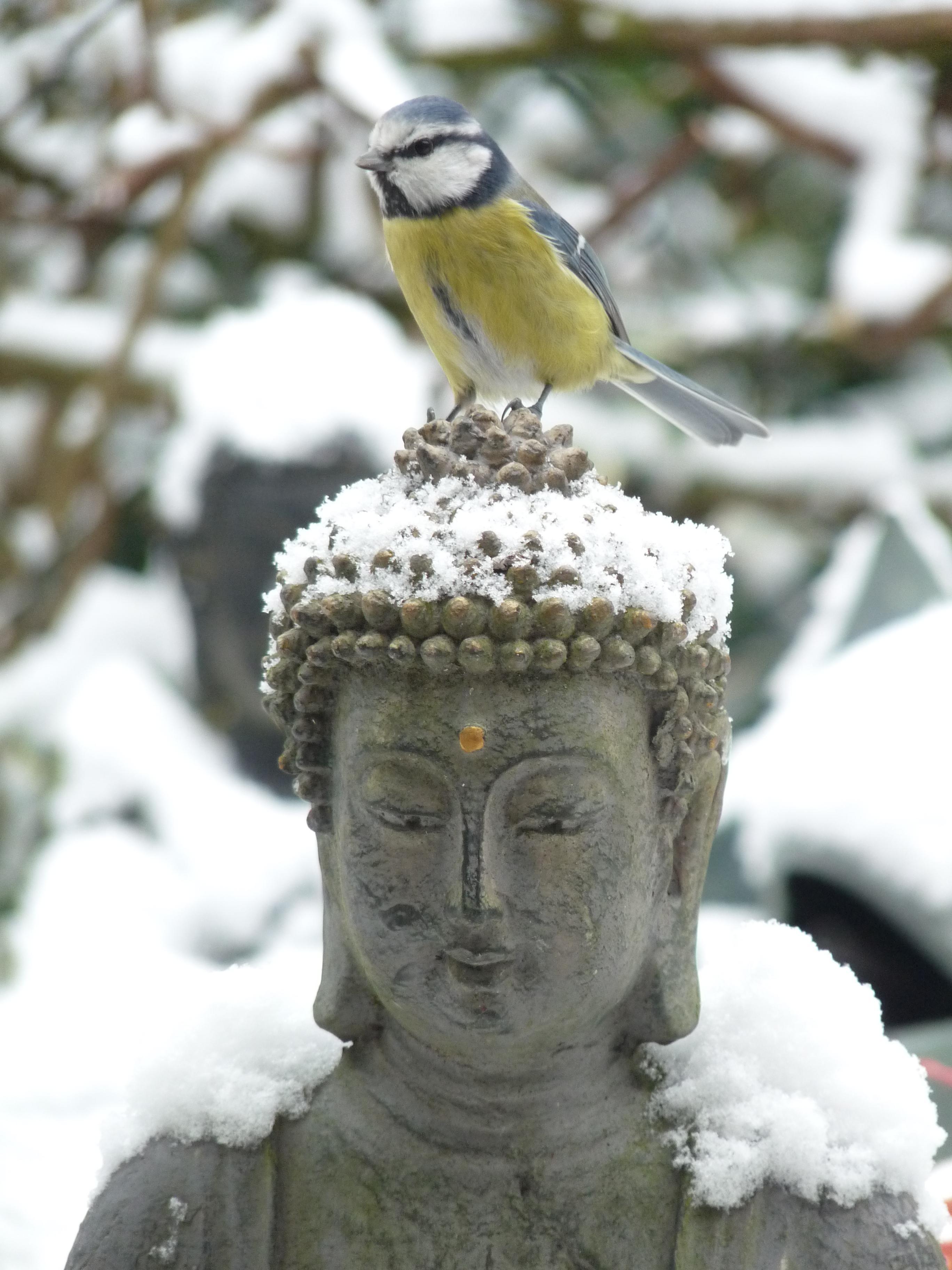 Boeddha plaatjes