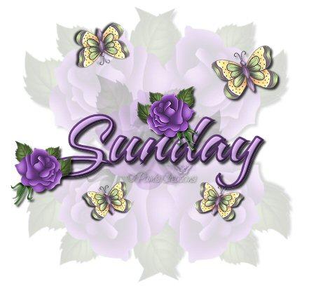 Purple20Rose20Sunday20DOW_byPam.jpg