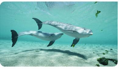 Dolfijnen plaatjes