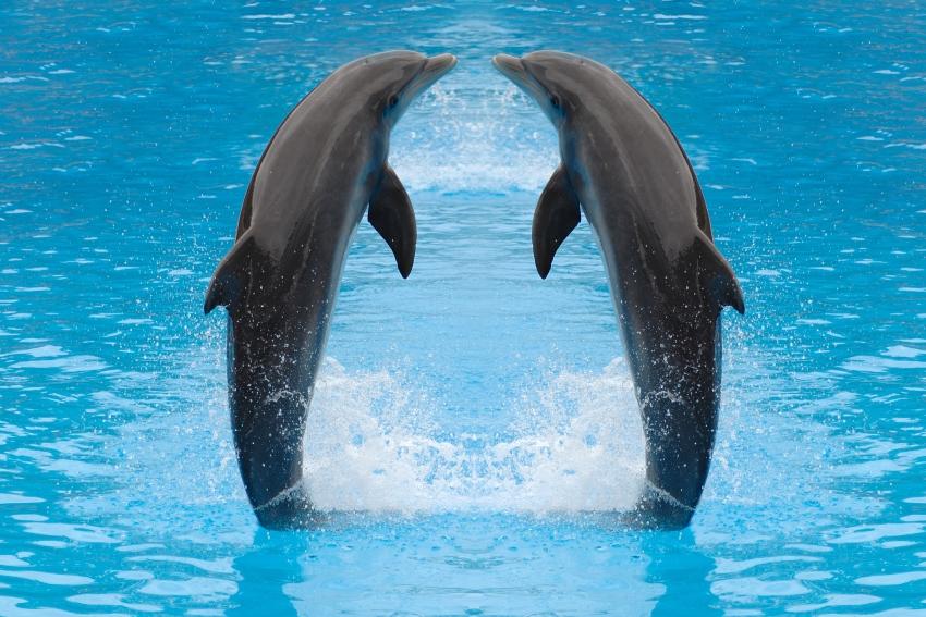 Dolfijnen Plaatjes 187 Animaatjes Nl