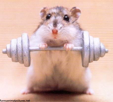 Plaatjes funny hamsters