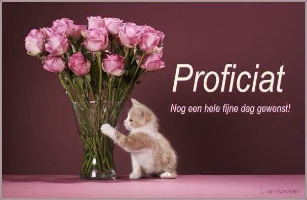 proficiat of gefeliciteerd Plaatje Gefeliciteerd » Animaatjes.nl proficiat of gefeliciteerd