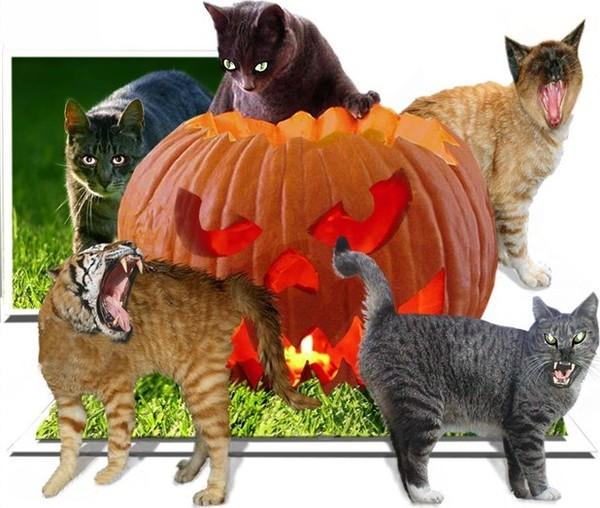 Halloween Plaatjes