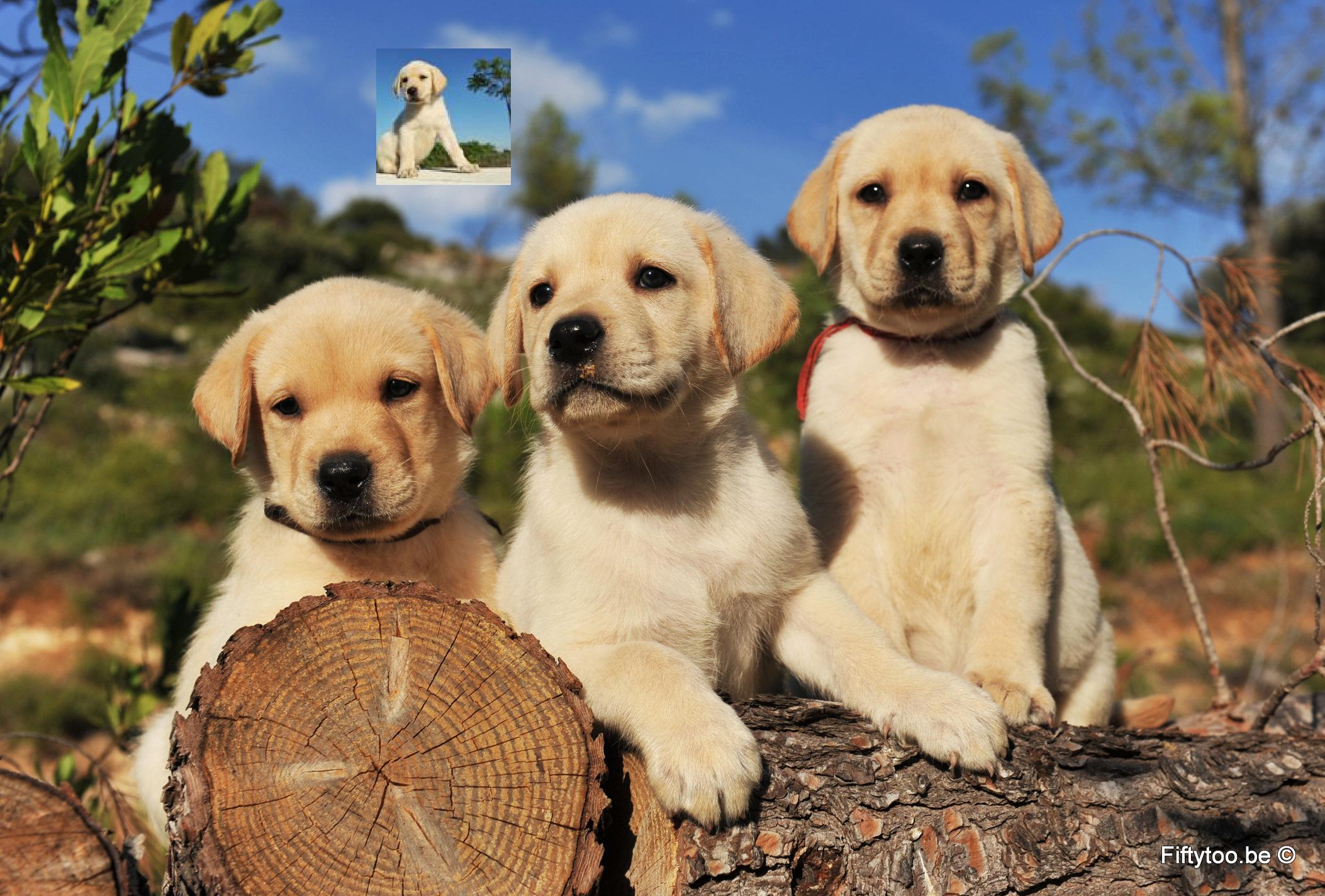 Honden Plaatjes