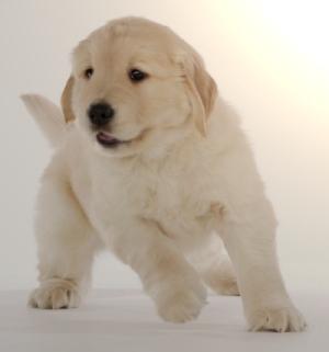 animaatjes-honden-65925.jpg