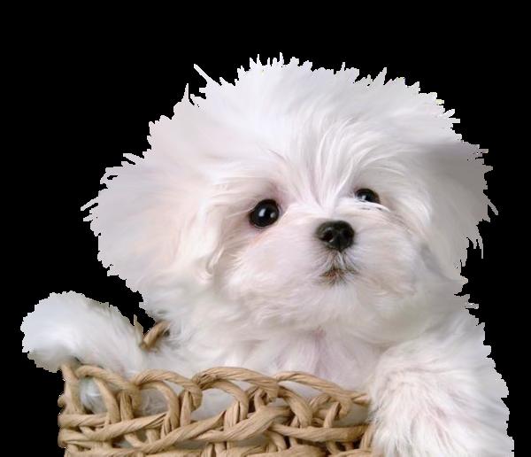 Honden Plaatje 187 Animaatjes Nl