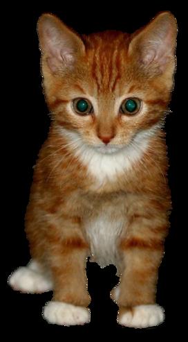 Katten Plaatjes En Bewegende Animatie Plaatjes Katten