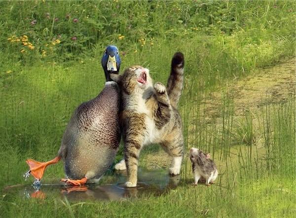 Katten Plaatje 187 Animaatjes Nl