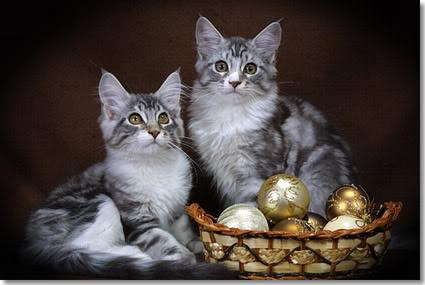 Plaatje Kerst Katten 187 Animaatjes Nl