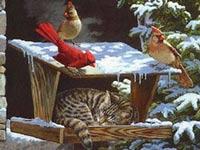 Plaatjes Kerstkaarten