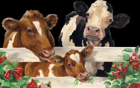 Koeien Plaatjes 187 Animaatjes Nl