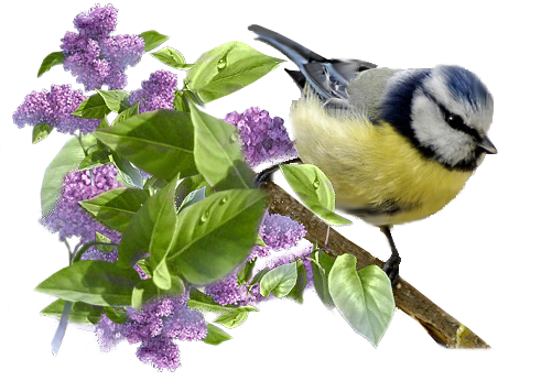 Afbeeldingsresultaten voor Mooie lente en pasen PNG's..