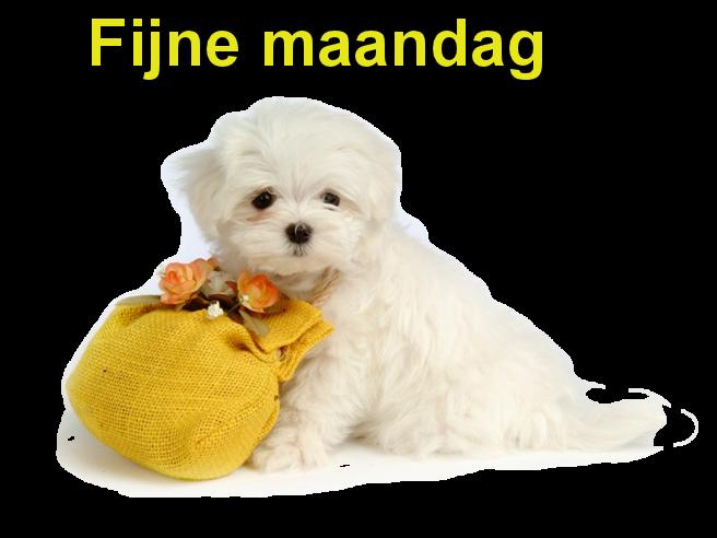 Plaatjes » Maandag » Fijn Maandag Hondje Met Tasje
