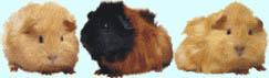 Plaatjes Marmot