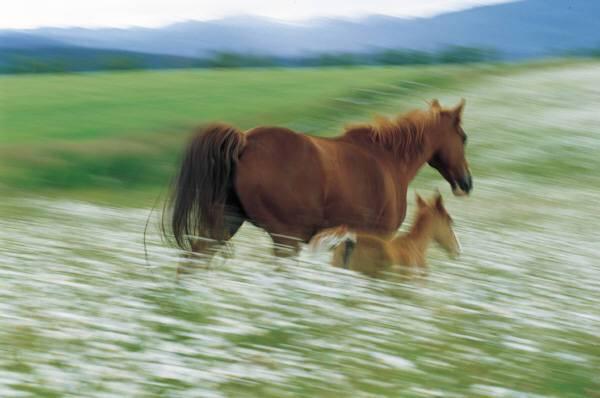 Paarden Plaatje 187 Animaatjes Nl