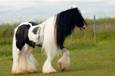 Paarden Plaatjes 187 Animaatjes Nl