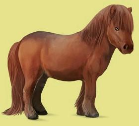 shetlander pony