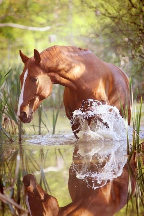 Paarden plaatjes