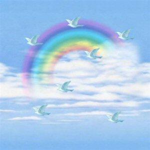 Regenboog plaatjes
