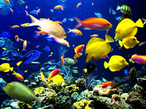 Vissen Plaatjes