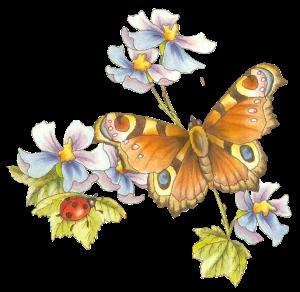 vlinder met lieveheersbeestje