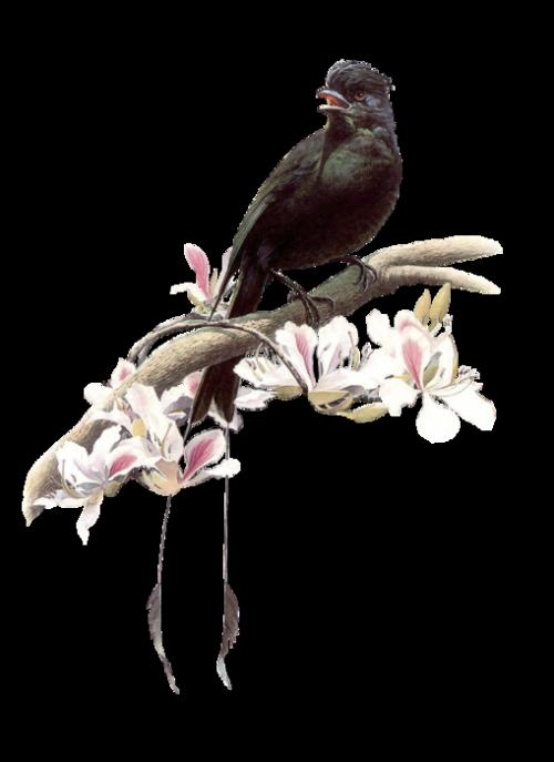 Vogels Plaatje 187 Animaatjes Nl