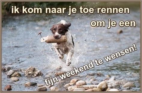 rennende hond fijn weekend
