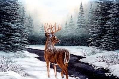 Winter Plaatje 187 Animaatjes Nl