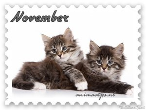 November Facebook plaatjes