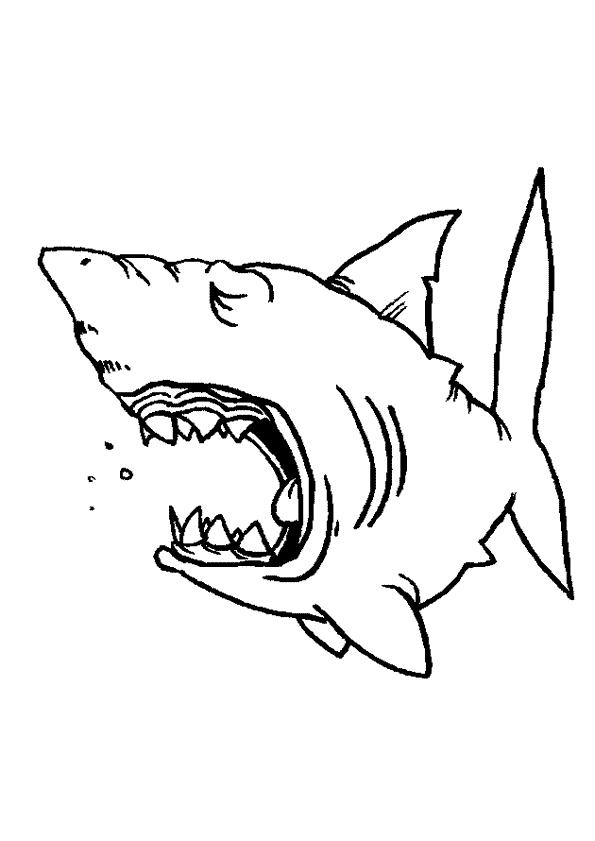 Haaien Kleurplaten Animaatjes Nl