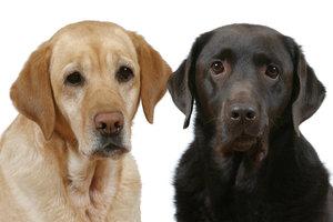 Honden Plaatjes En Animatie Gifs 187 Animaatjes Nl