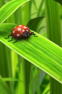 Insecten Wallpapers Iphone