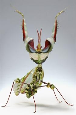 Insecten Wallpapers Iphone